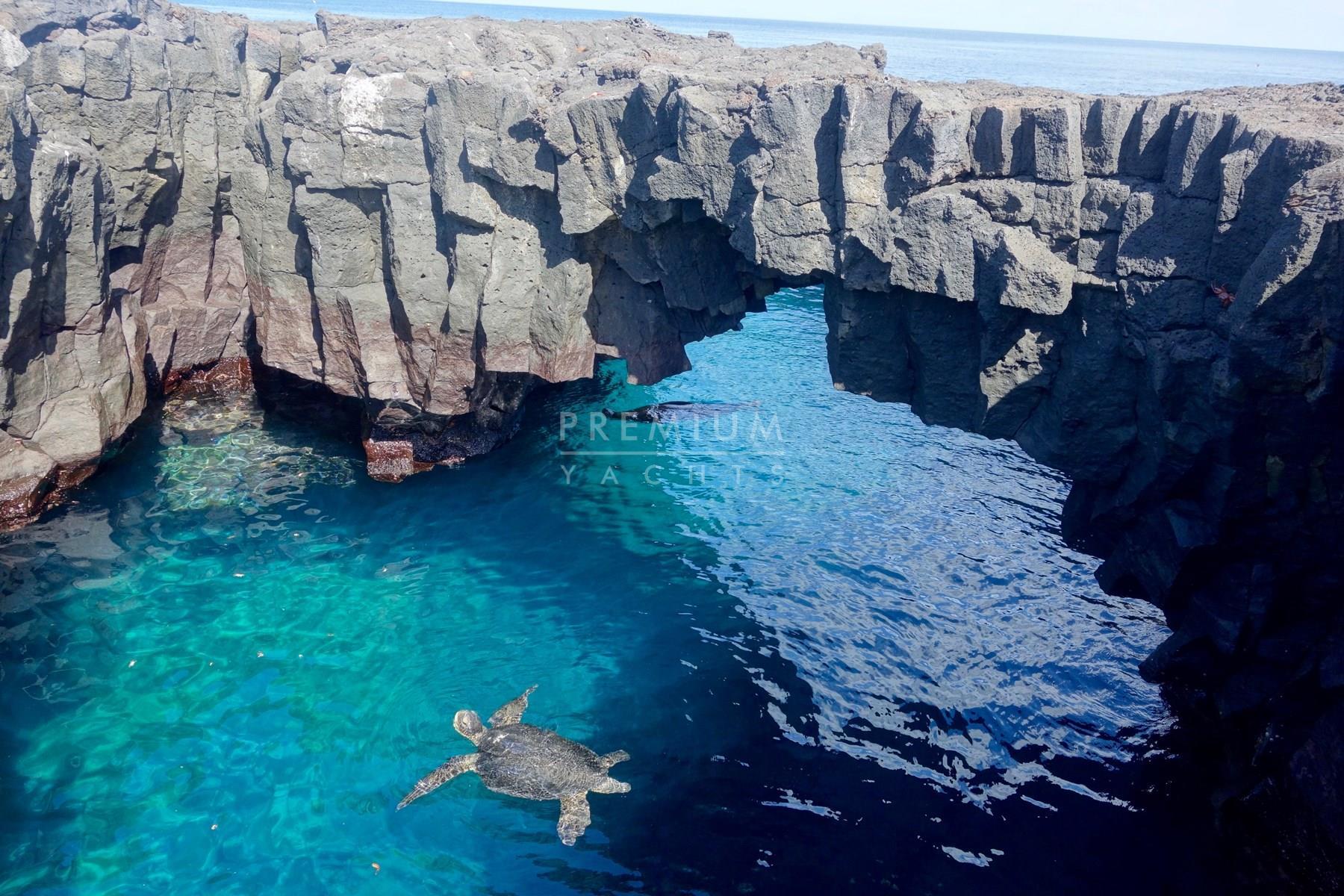 Sea turtles in Santiago island