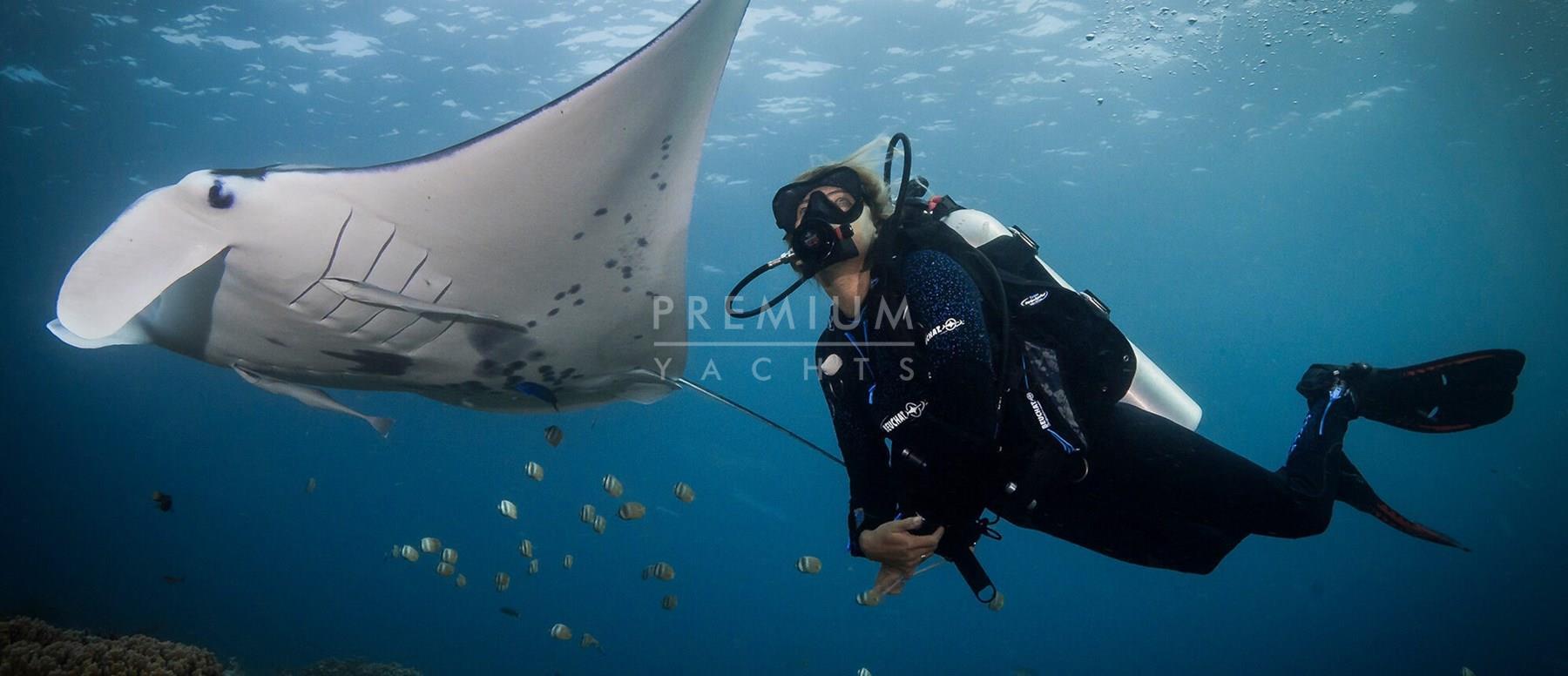 Kri peninsula, diving with manta rays